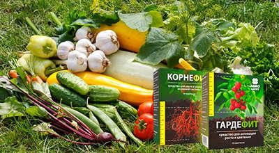 Удобрения Корнефит и Гардефит для урожайности.